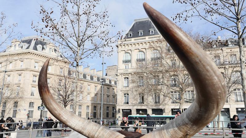 Les cornes d'un animal d'un cirque place de la République à Paris le 17 janvier 2018 © Vaea Devatine