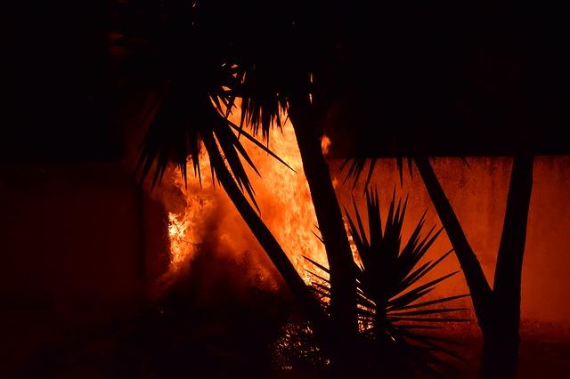 Palmier en feu © Ulrike Leone.