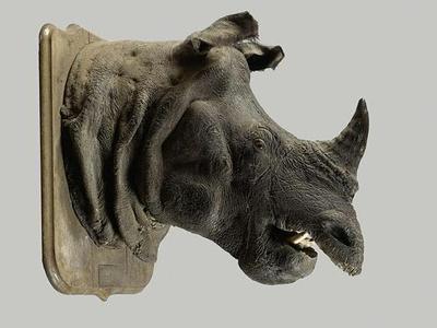 Rhinocéros (c) Etude Chevau Legers.