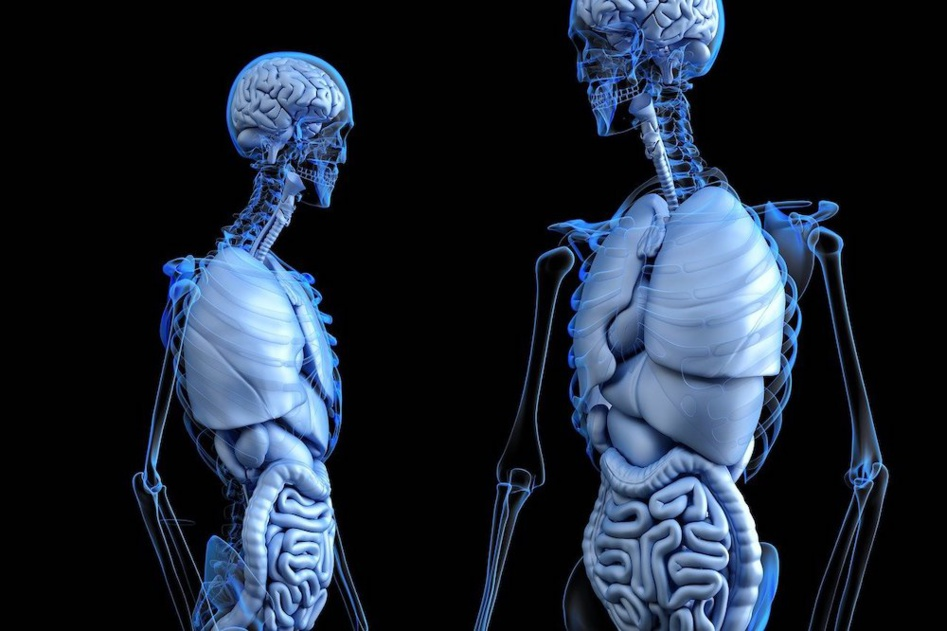 Les maladies des bronches et du poumon ne sont pas à prendre à la légère, surtout en période de pandémie affectant les bronches et poumon © DR