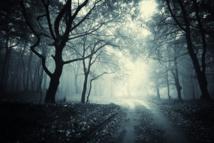 Bois © andreiuc88 - Fotolia.com