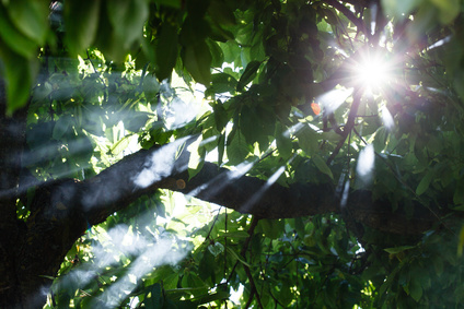Sous les bois © Maksim Shebeko - Fotolia.com