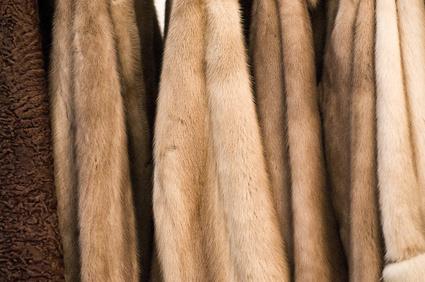 Vrais manteaux de fourrure © INFINITY.