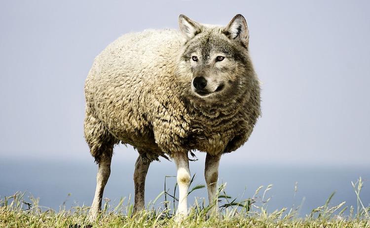 Les agents d'accueil et de surveillance des espaces verts de Paris, d'agneaux ex-DEVE, doivent devenir des loups © DR