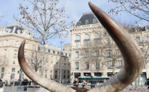 Cirque avec animaux sauvages : le maire ne peut pas interdire son installation...