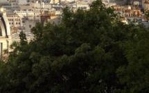 La Mairie de Paris fait la chasse aux locaux insalubres