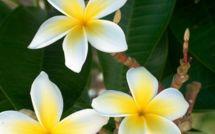 Le temps de Nini la Petite Souris polynésienne