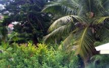 """Rediffusion de l'été pour les enfants : le conte pour grandir """"Nini la Souris polynésienne"""""""