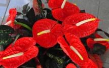 Premiers accords avec Nini la Souris polynésienne