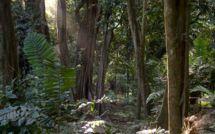 Les terribles histoires de Nini la Souris polynésienne