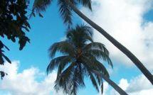Le documentaire et Nini la Souris polynésienne