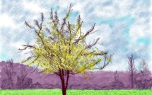 David Hockney : The Arrival of Spring at the Royal Academy of Arts, London